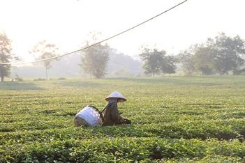 Hanoi – Phu Yen.